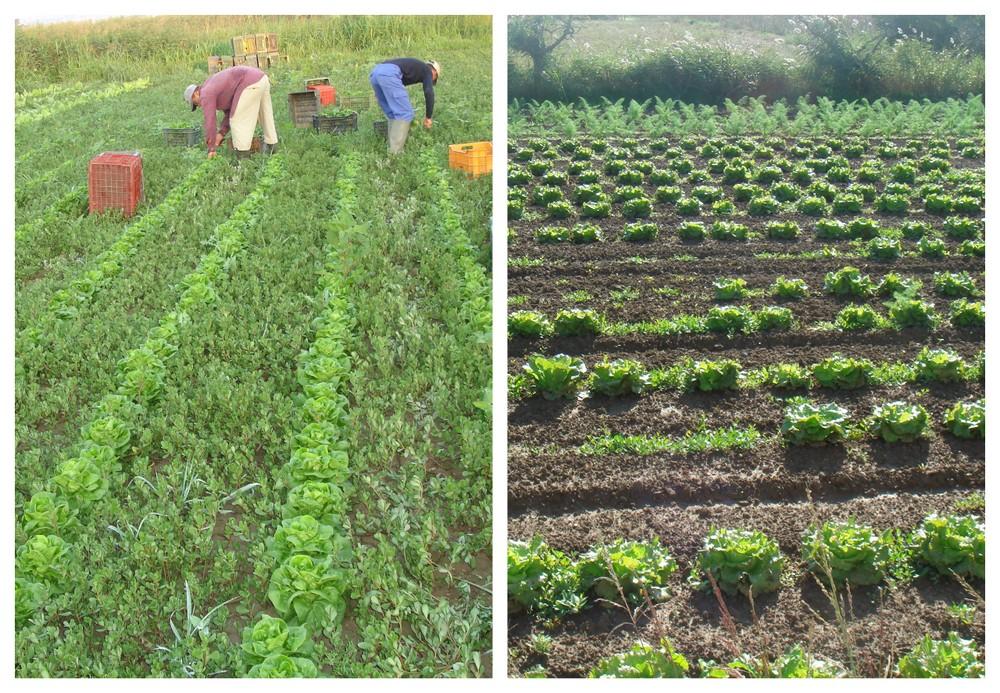 Frutas y verduras de cultivo ecol gico recapte for Cultivo de verduras en casa
